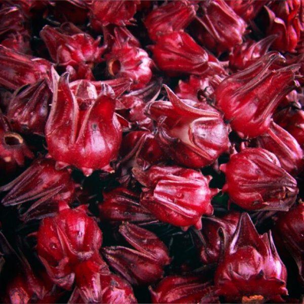 ขายเมล็ดพันธุ์กระเจี๊ยบแดง